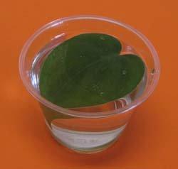 Plant experiment, Creating Oxygen, Photo by Myrna Martin