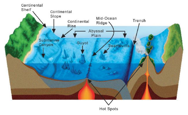 Seafloor showing different areas of the seafloor including a trench NOAA