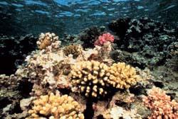 Coral reef, NOAA