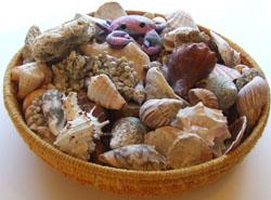 Seashells, Photo by Myrna Martin