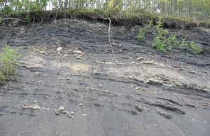 Coal seams exposed in road cut near Sutton, Alaska, Photo by Myrna Martin