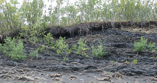 Layers of coal exposed along road in Alaska  Myrna Martin